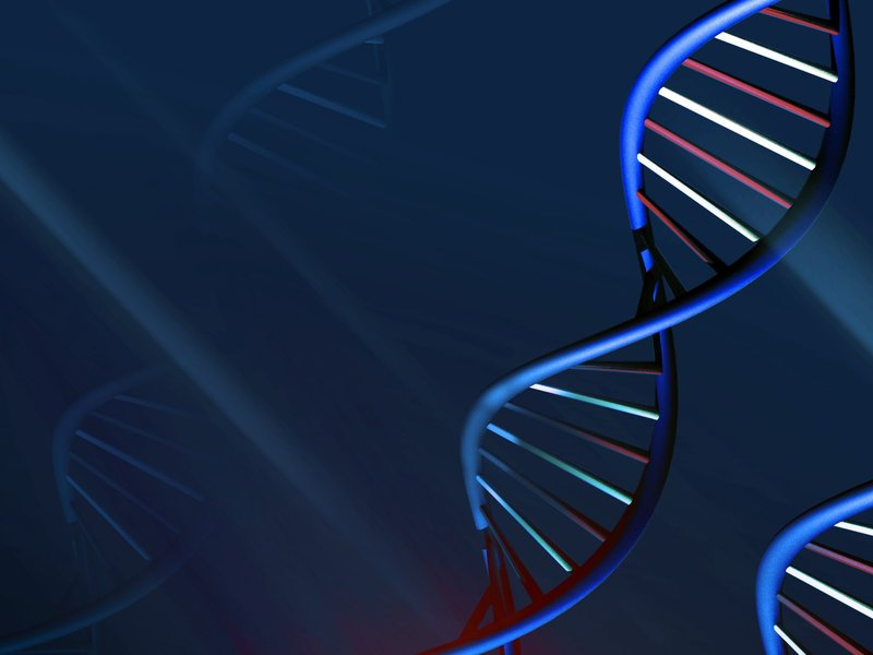 Weny news scientists build dna from scratch to alter lifes blueprint new york ap scientists are working to create custom made dna to be inserted into living cells that would change how they function or provide treatments malvernweather Choice Image