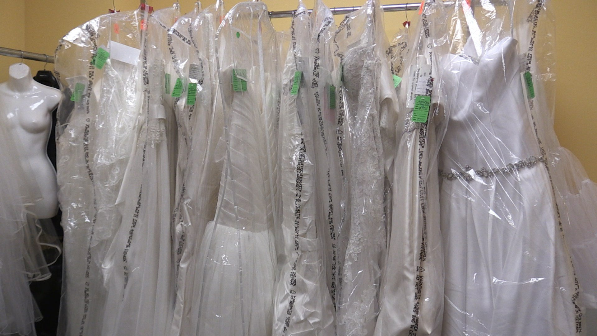 WENY News - Bridal Blowout Sale to benefit Humane Society of ...