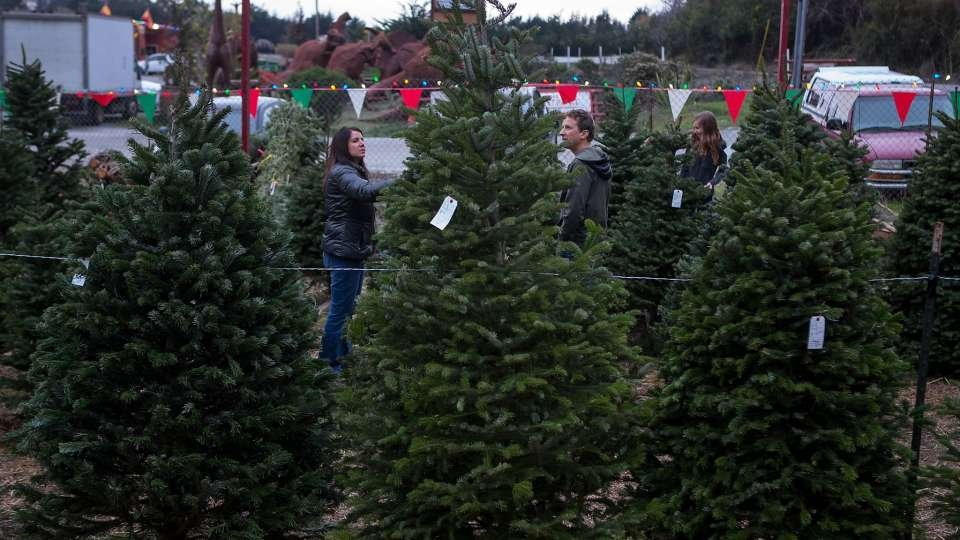 WENY News - New York Officials Promote Local Christmas Trees