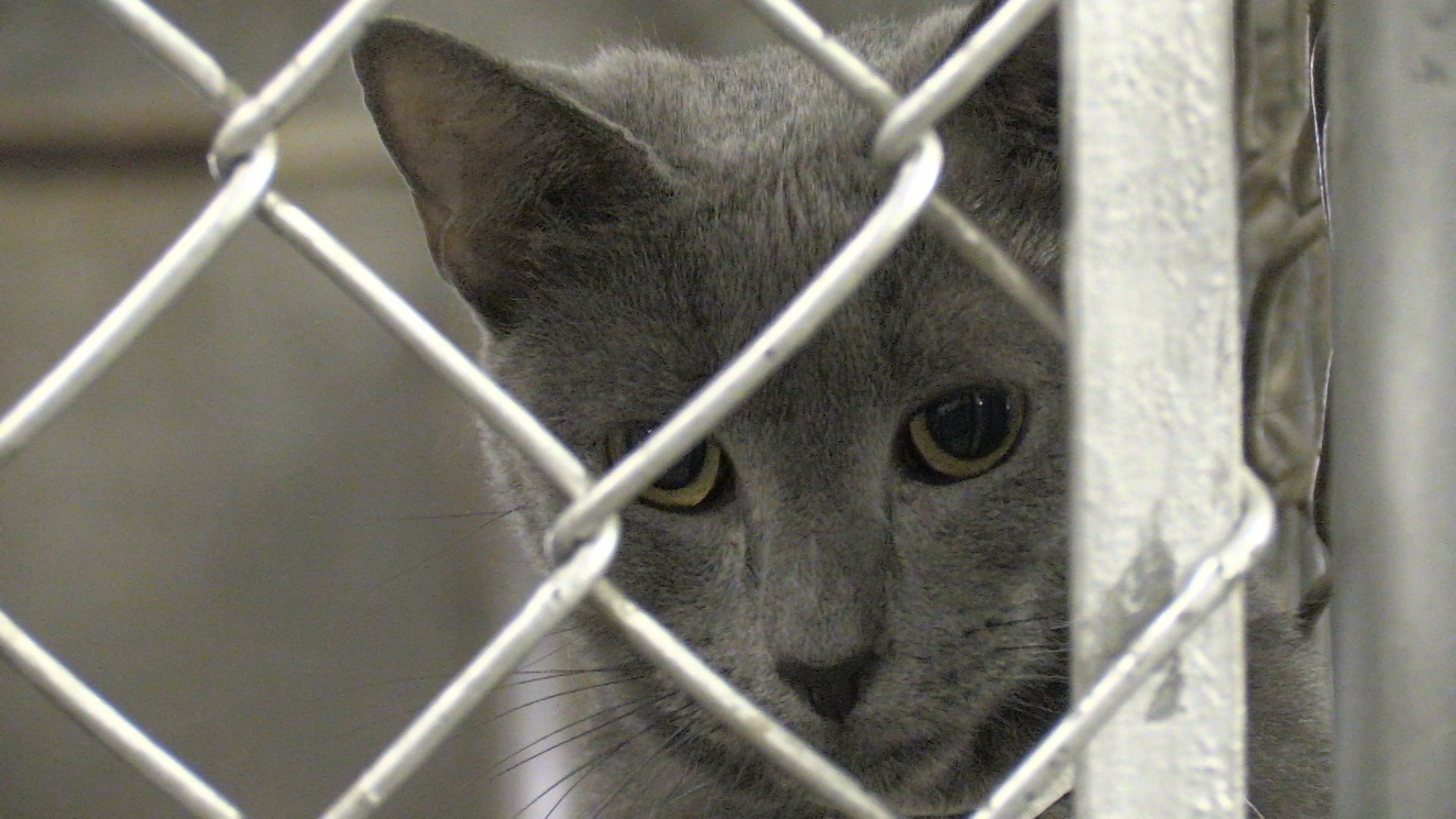 Weny News Animal Rescue Feral Cats Being Poisoned In South Corning