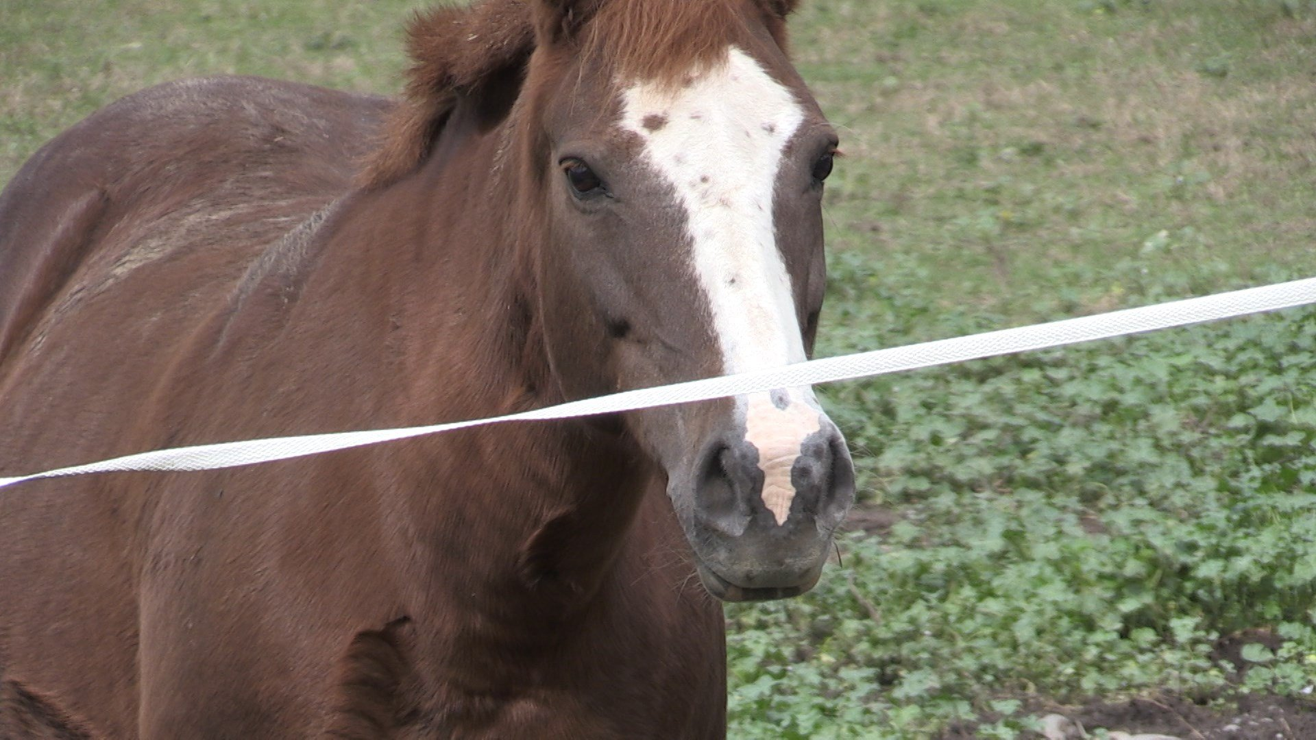 local farm to launch anxiety focused therapeutic riding program