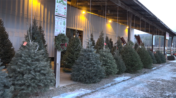 Experts share Christmas tree safety tips
